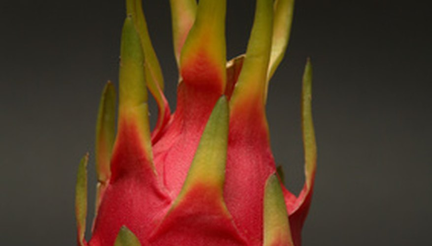 Night blooming cereus produces delicious dragon fruit.