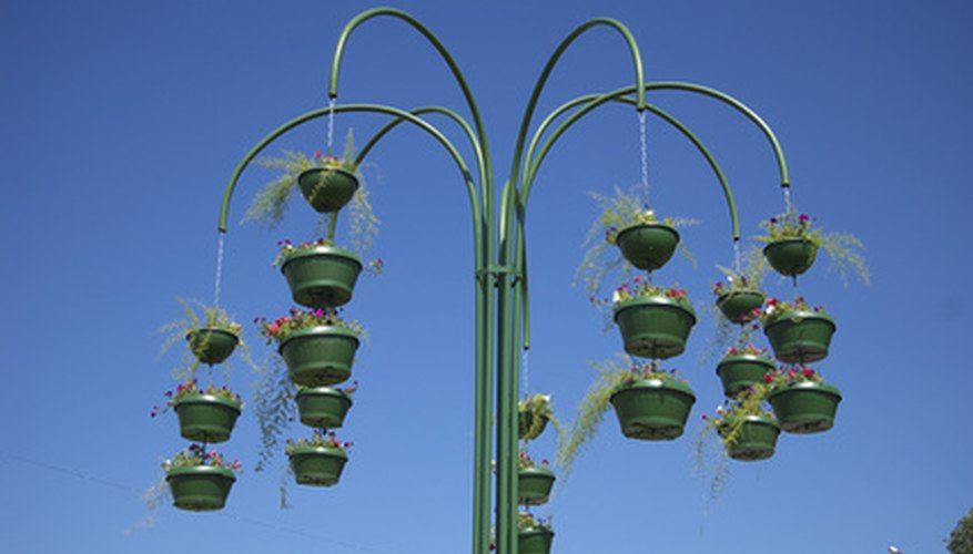 Hanging baskets filled with annuals can provide a burst of summer color.