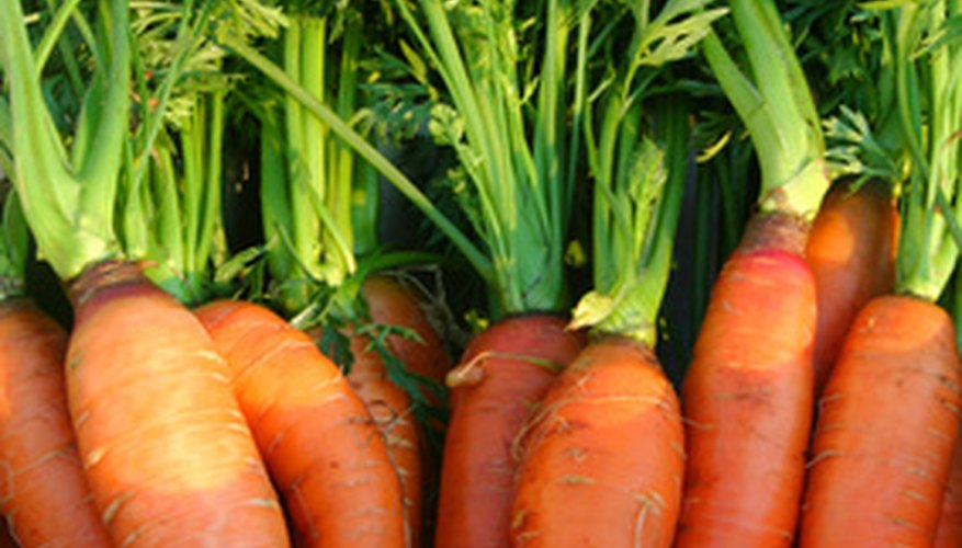 Carrots are root vegetables.