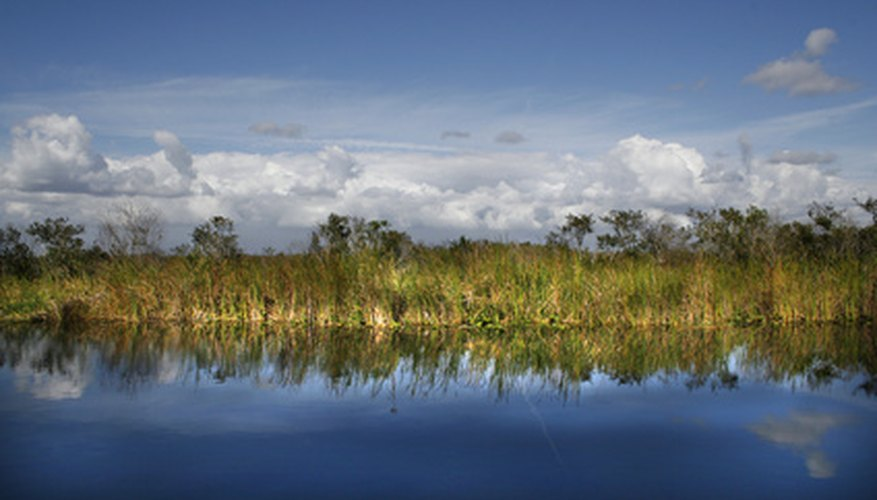 Grasses form ecologically critical Florida habitats.