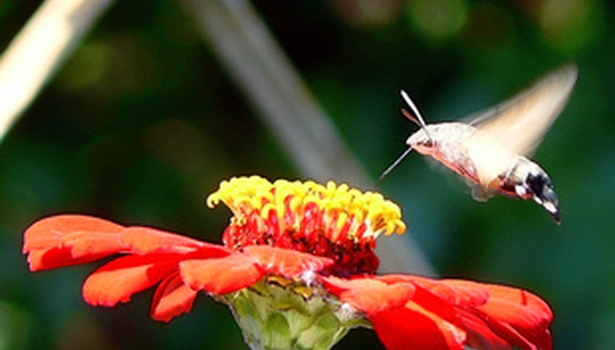 Reddish flowers tend to attract hummingbirds.
