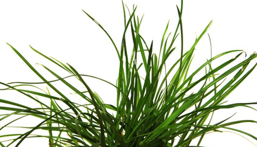 Select warm season grasses for Florida lawns.