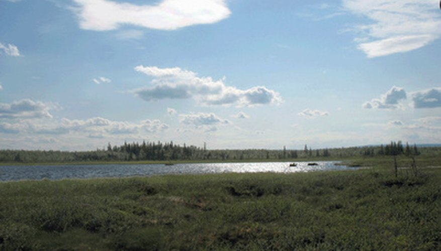 Bogs are found mainly in the Northern Hemisphere.