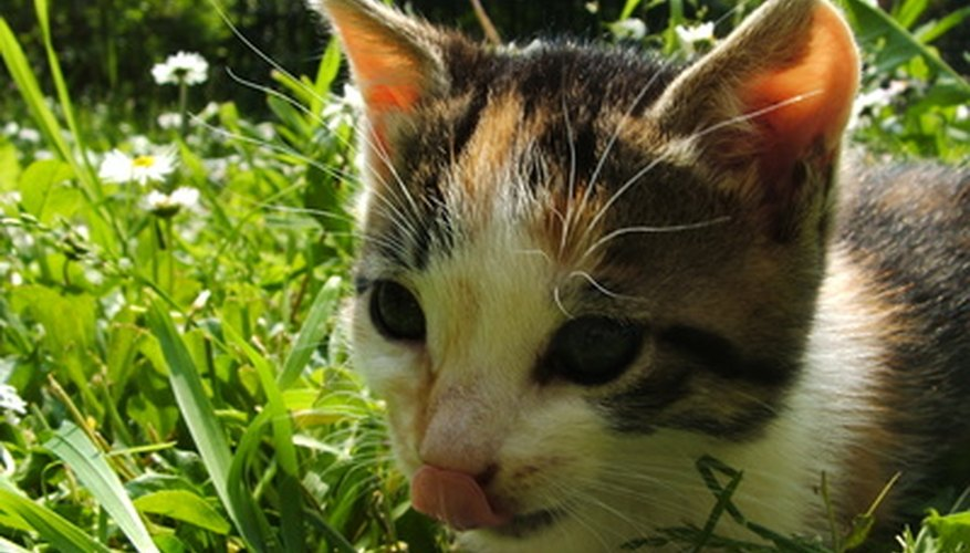 Cats love to eat grass.