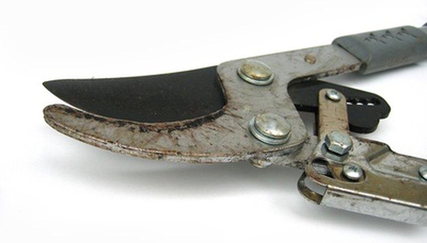Loppers are larger versions of hand pruners.