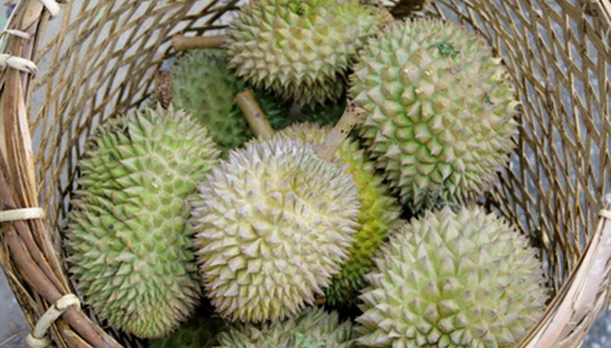 Durians are covered in spikes.