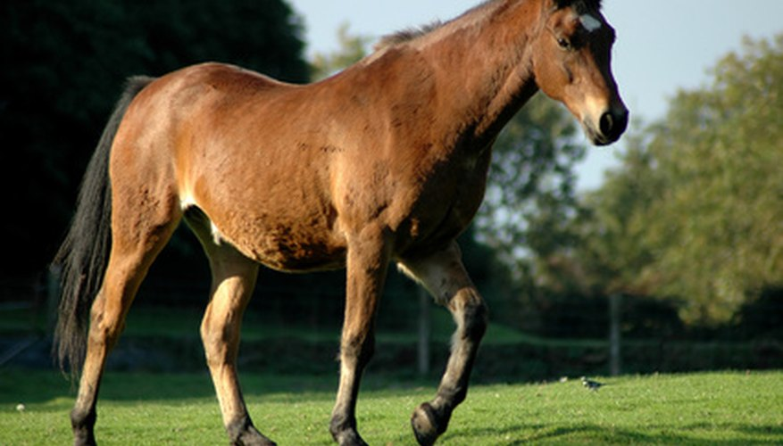 There are aloe products made for horses and other animals.