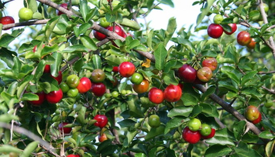 Having disease-free trees is crucial to producing a healthy fruit crop.
