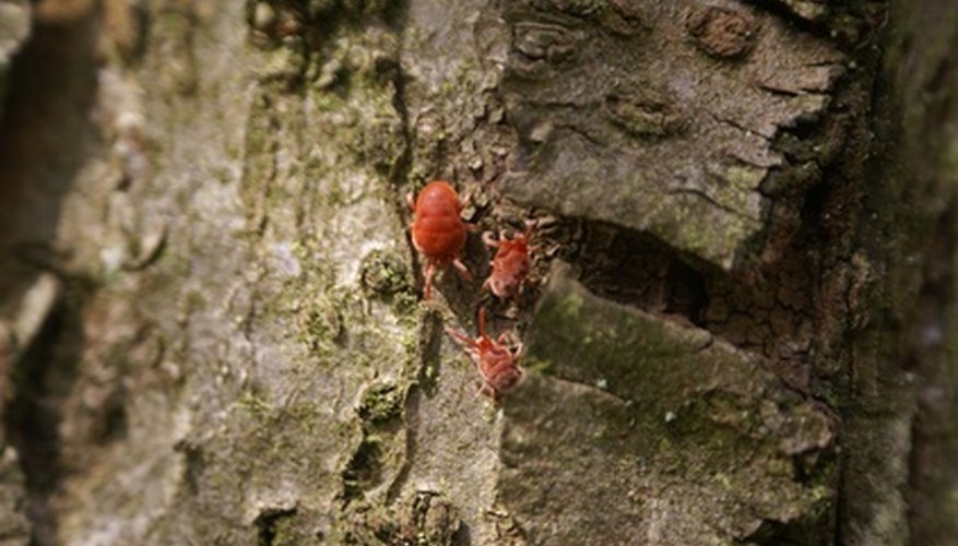 Red mites on a tree