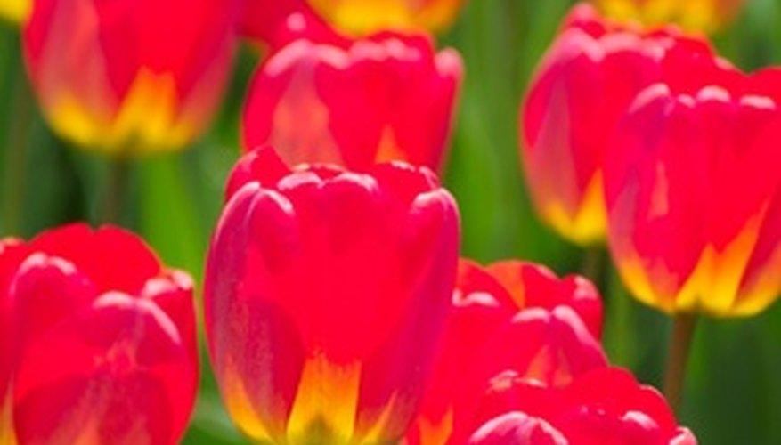 Las flores son formas bonitas de transmitir significados sin palabras.