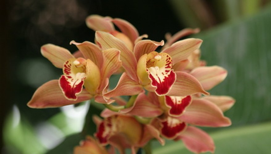 Vanilla orchids are the source of vanilla beans.