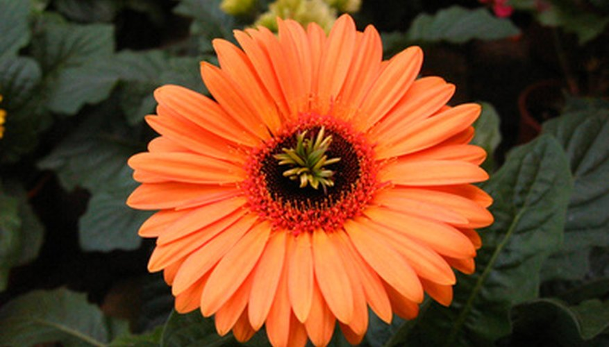 South African Winter Flowers Garden Guides