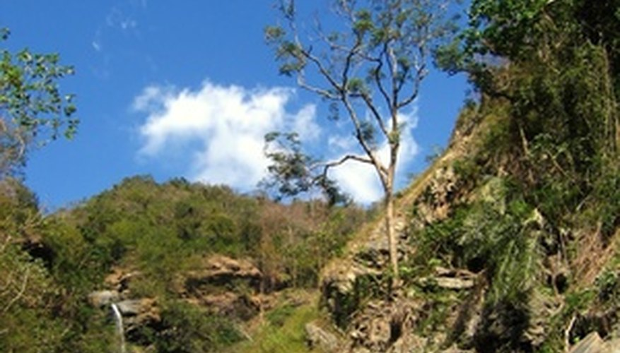 Taiwans forests contain a number of native plants.