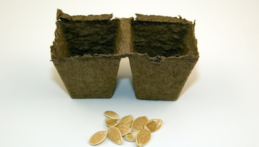 Peat has several uses; one use is biodegradable plant pots.