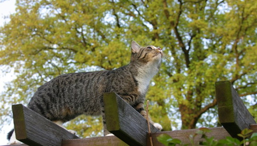 A cat enjoys a bird's eye view atop a pergola.