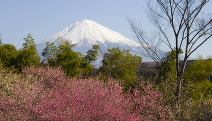Japan grows many different types of trees.