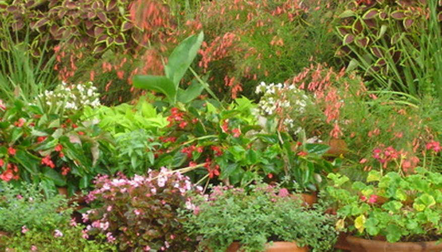 Potted plants require insulation from the cold weather to survive the winter season.