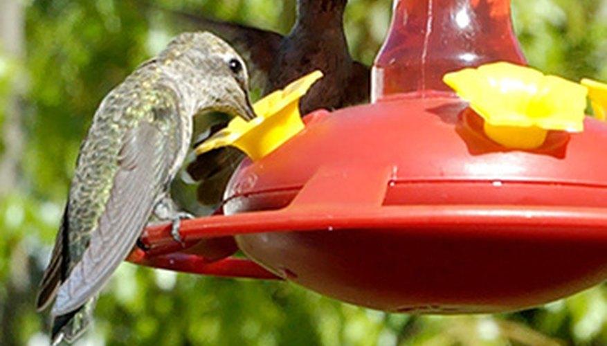 Las flores rojas, amarillas, rosadas y anaranjadas atraen colibríes.
