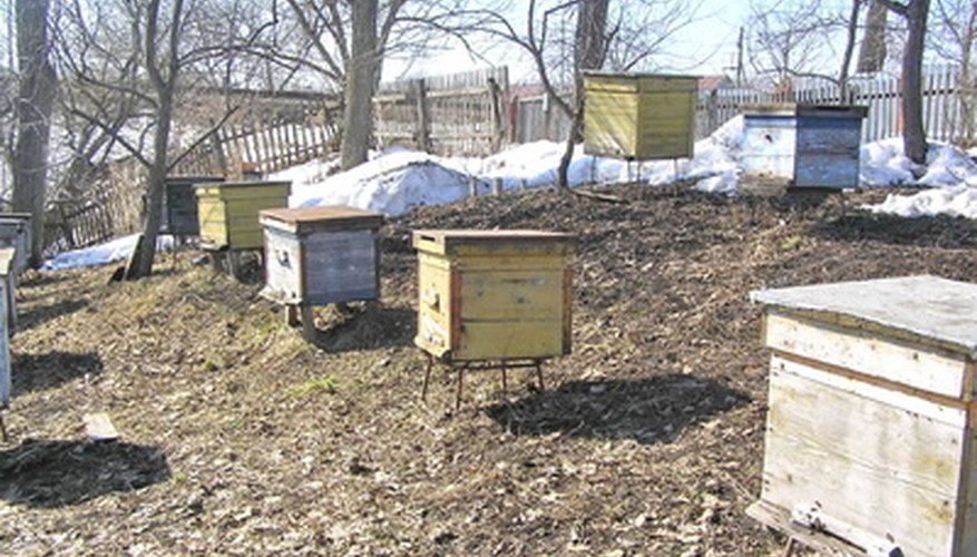 Painting your wooden beehive will help protect it from the elements