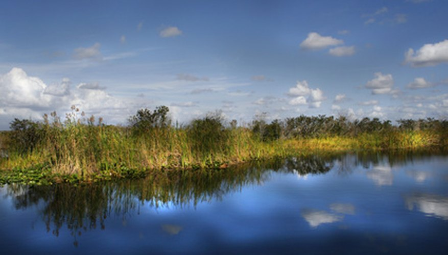A wide range of plants and algae make up the Everglades.