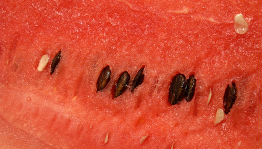 Sow the watermelon's black seeds for your own backyard plants.