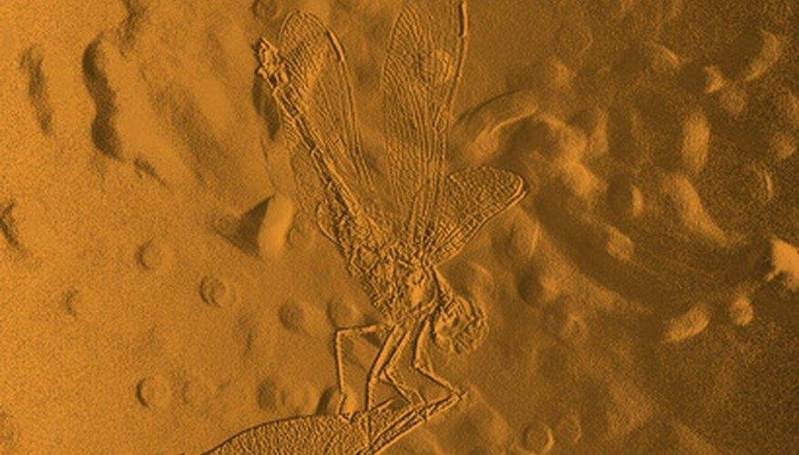 Los fósiles de molde dejan solo una huella del organismo.