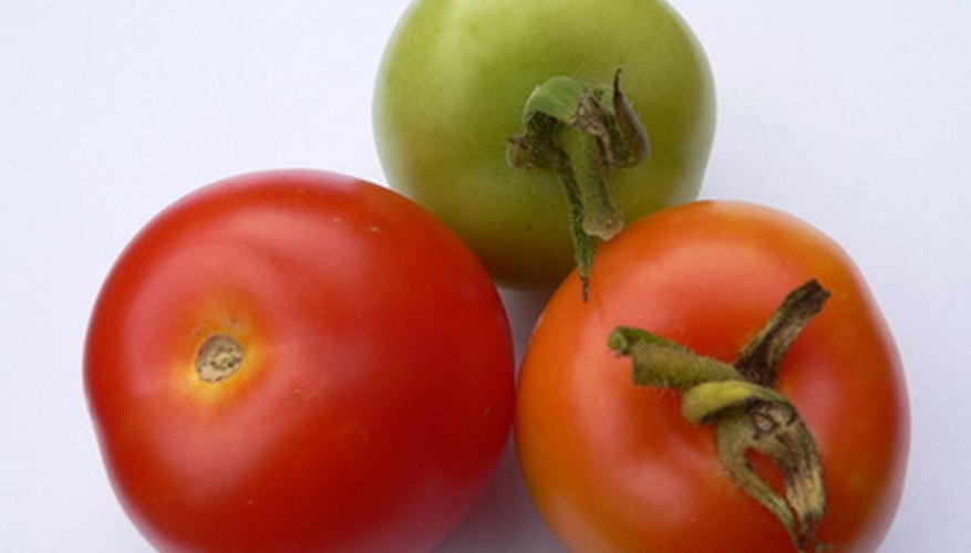 Indeterminate tomatoes may have fruit at every stage of development at one time.