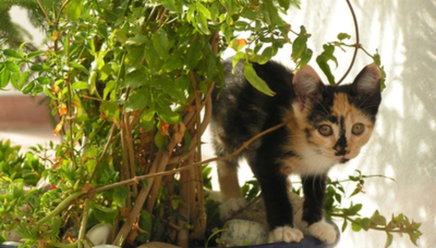 Speak to a veterinarian if your cat eats a poisonous plant.