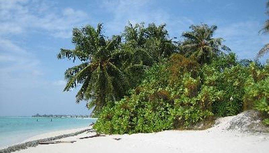 Si llegas estar en una isla desierta, aprende cómo obtener agua dulce.
