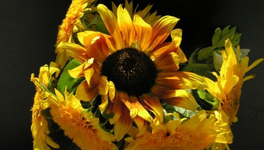 There are nearly 2000 individual flowers in one sunflower bloom.