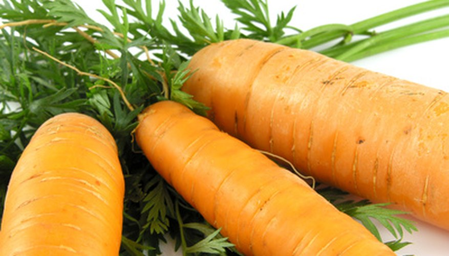 Carrots produce seed the second year after planting.