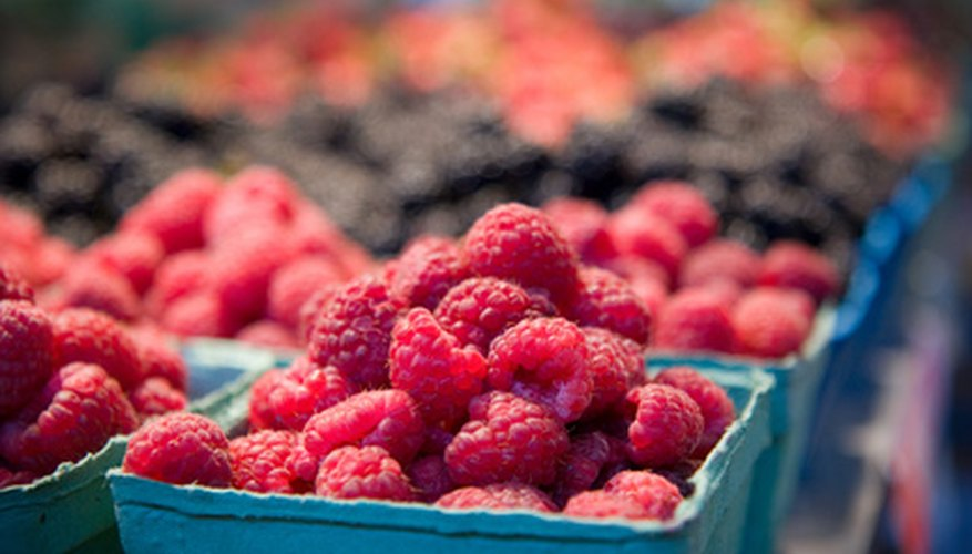 Raspberries are a popular summer treat and can be grown successfully in much of the United States.