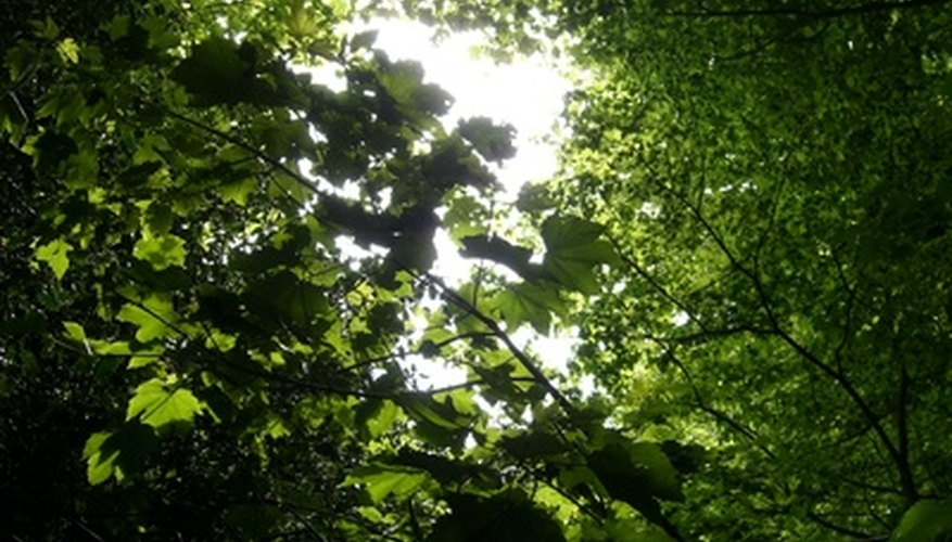 Plants need different light intensity: canopies need high intensity, while understory plants need lower intensity.