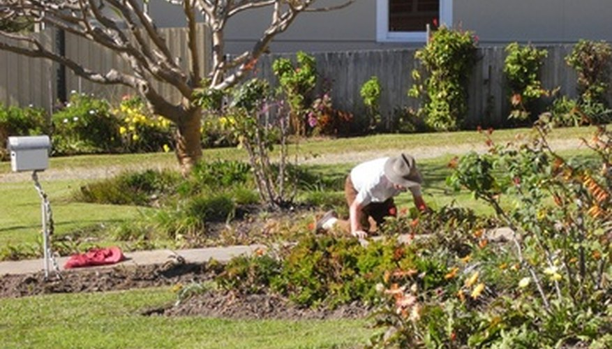 Remove weeds by pulling when they're young.