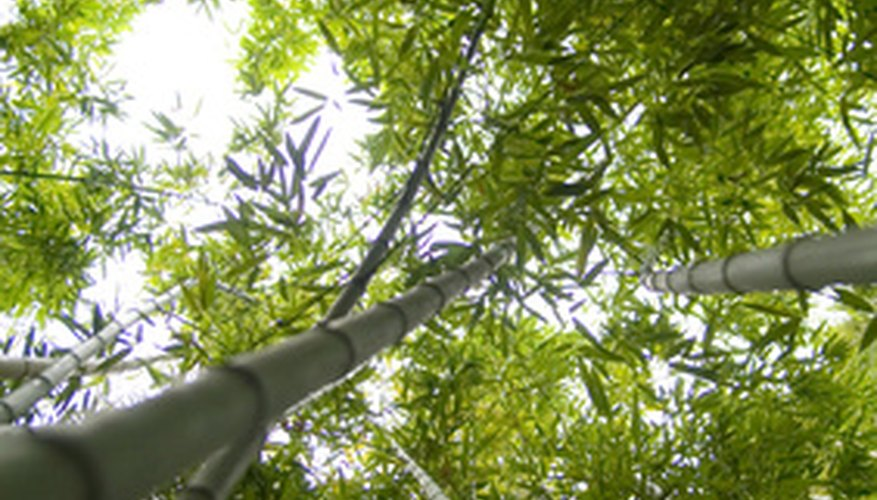 Bamboo is one of the fastest-growing plants on earth.