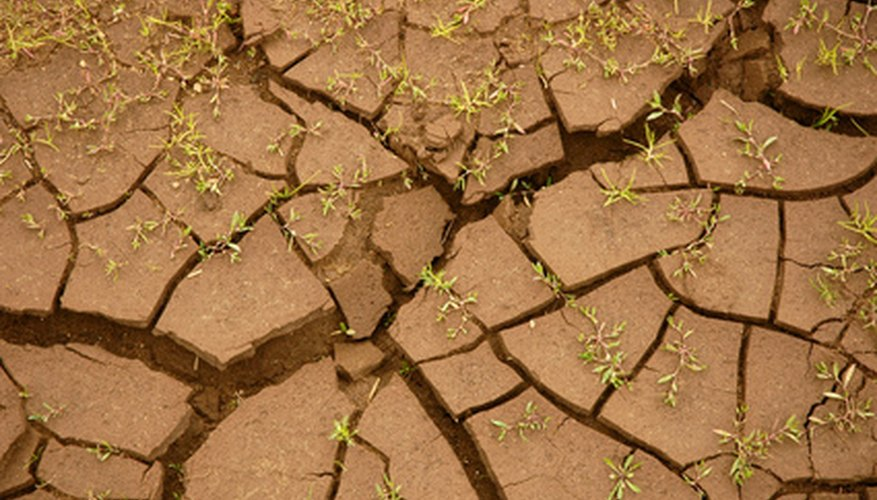 Clay soil often cracks when it is dry.