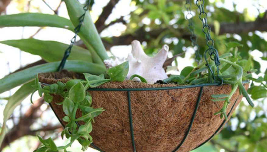 Protect hanging baskets from drying with proper planning.