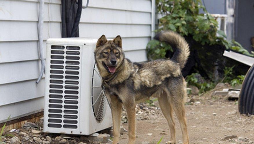 Tu acondicionador de aire ayudará a mantener tu casa, y a veces tu mascota, fría.