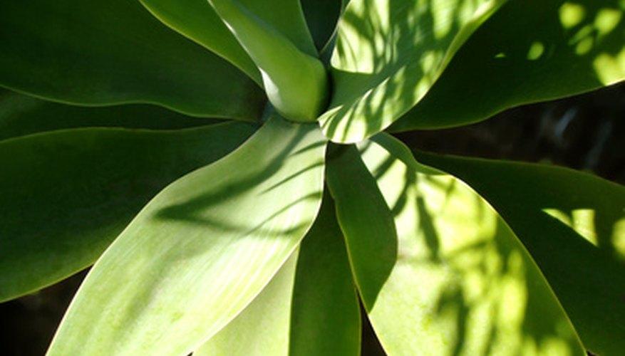 Las plantas necesitan de la luz solar.