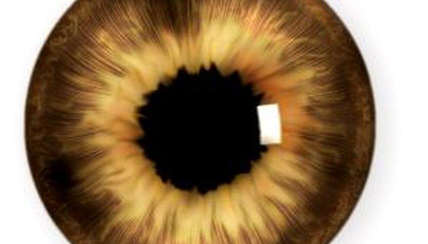 Tu hijo debe saber que la pupila es el punto oscuro ubicado en el centro del iris.