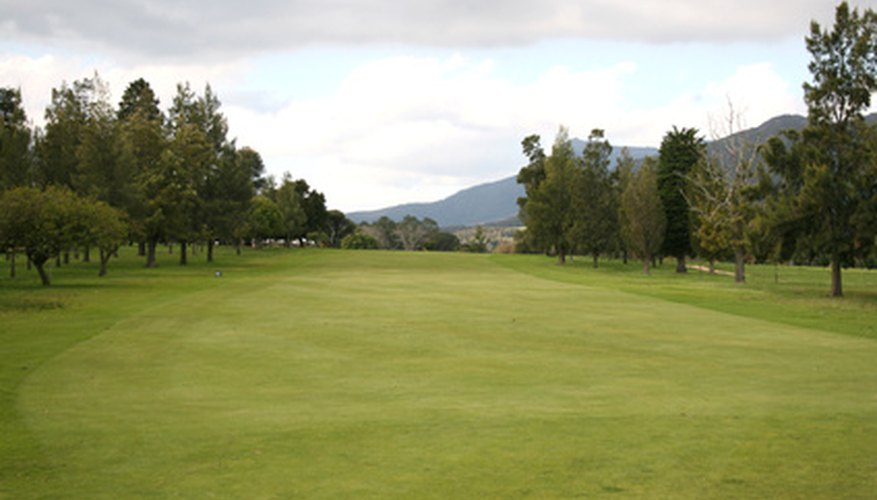 Bermuda grass is exceptional for Southern golf courses and athletic fields.