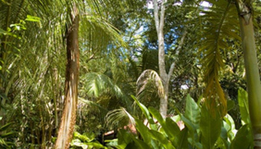 El ecosistema de la jungla está formado por plantas y animales.
