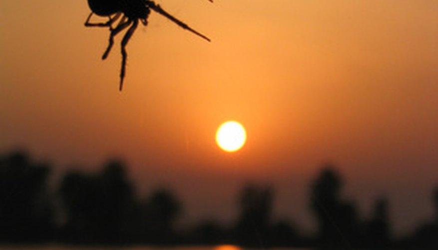 Arkansas has an assortment of spider species.