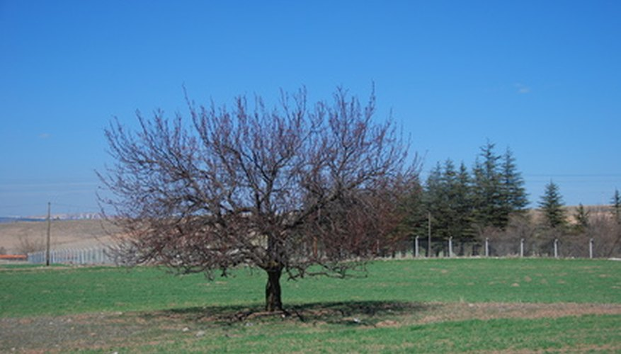 Dormant sprays are applied in the winter or early spring.