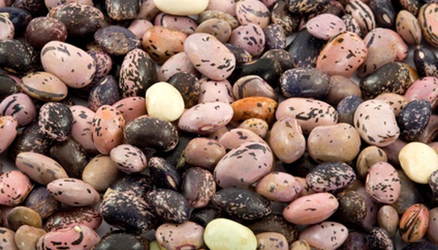 It's easy to save and store bean seeds.