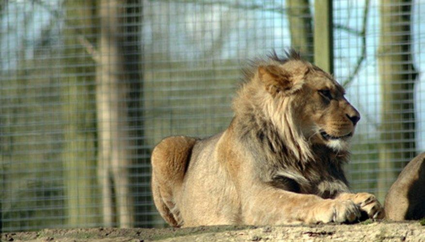 Si los animales salvajes pudieran participar en los Juegos Olímpicos, los animales terrestres serían más rápidos cualquier ser humano.