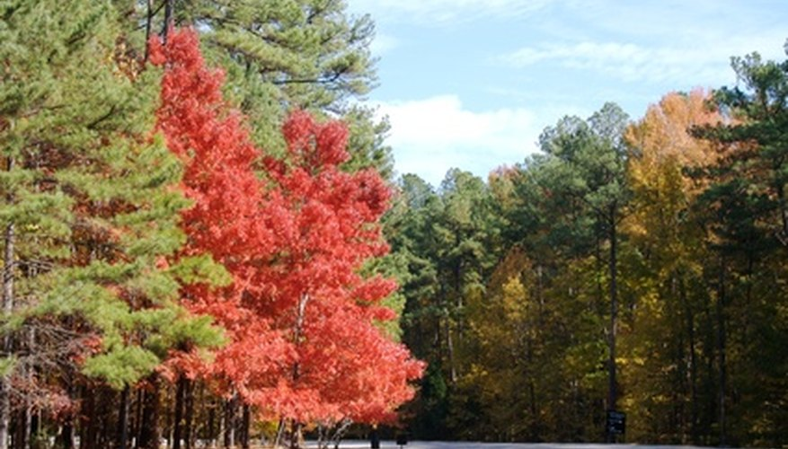 North Carolina's diverse native trees reflect the varying climates and regions.