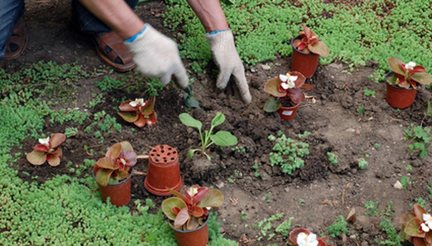 Prepare the garden bed prior to transplanting.