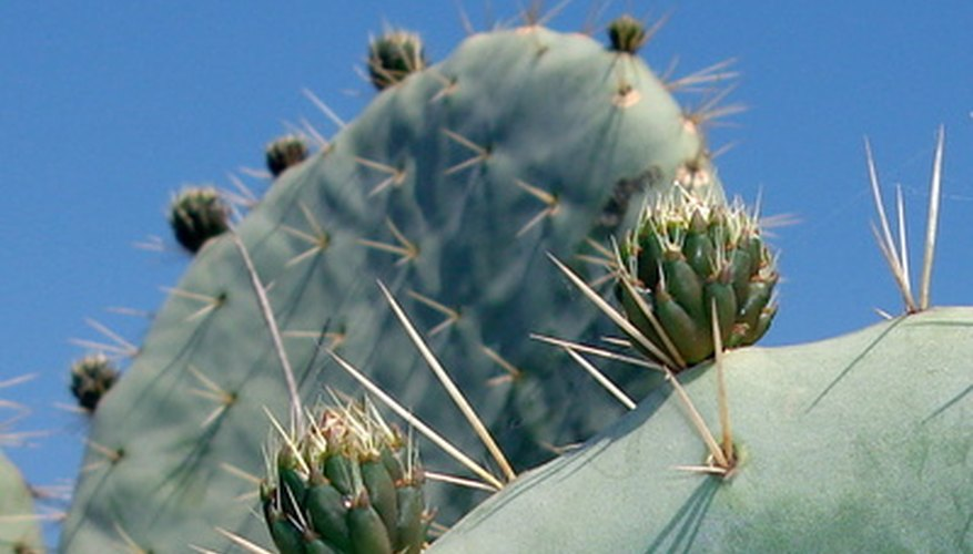 Look up the characteristics of the cactus you own.