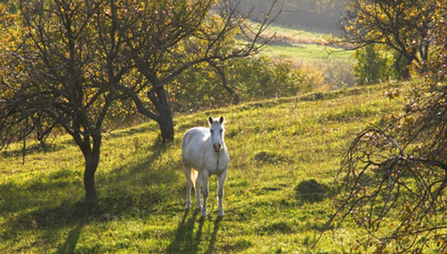 Be mindful of tree selection for horses; many shade trees contain toxins that are poisonous to horses.
